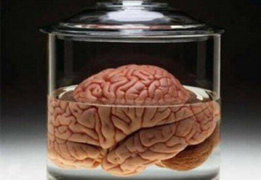 brain_cover